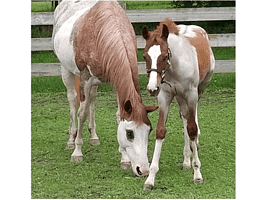 Willow (mother horse) and Malaya (baby horse)